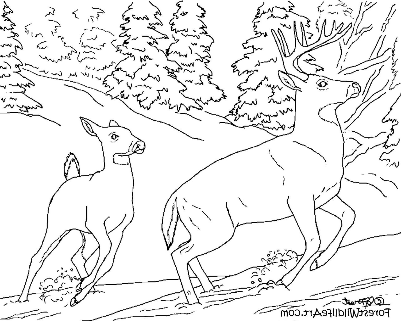 1500x1200 Animal Inest Drawingest Wildlife Art Learn Wildlife