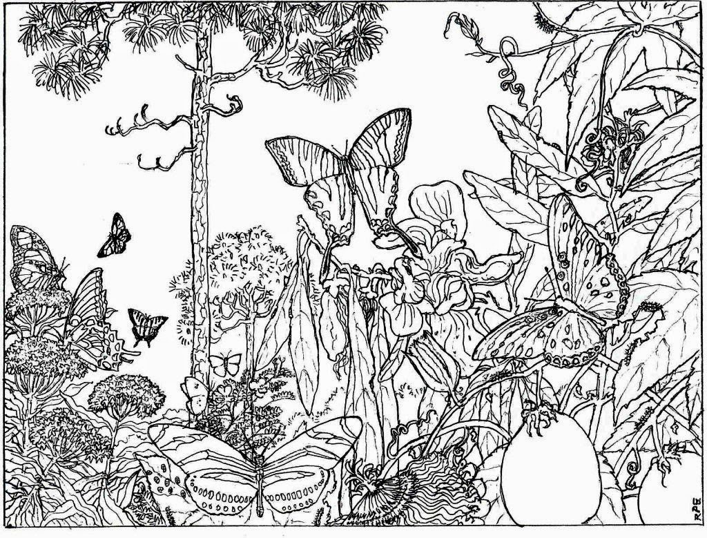 1024x779 Coloring Pages For Adults Nature Colouring To Sweet Draw Print