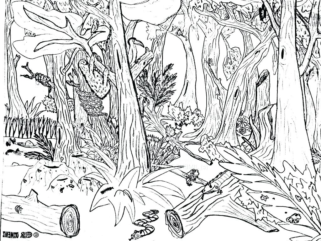 Forest Habitat Drawing at GetDrawings.com | Free for personal use ...