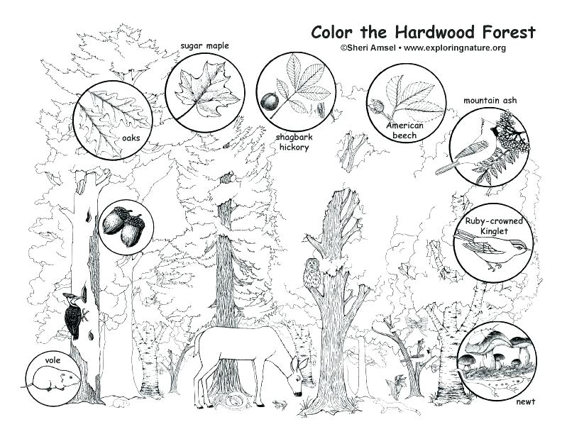 792x612 Forest Coloring Forest Coloring Pages Enchanted Forest Coloring