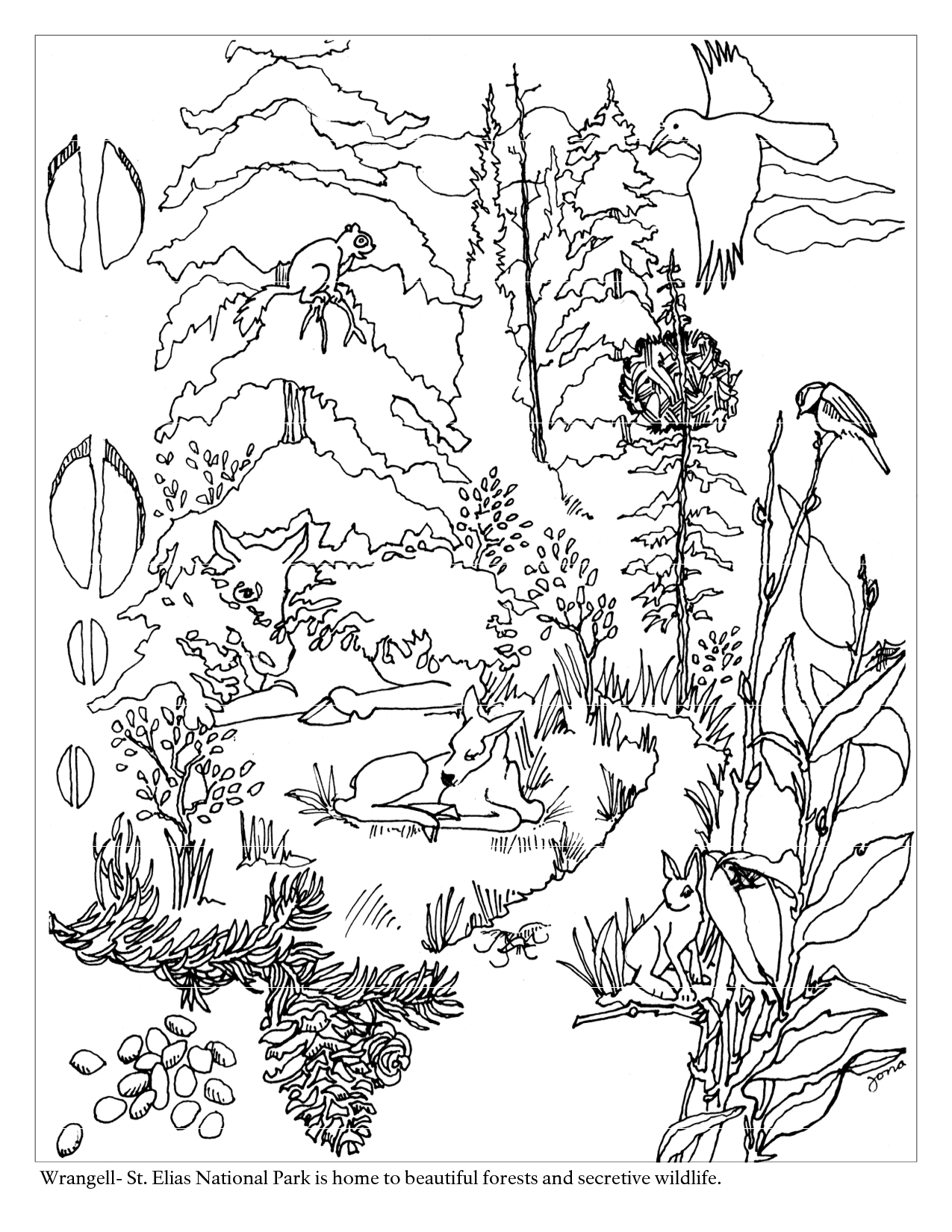 1275x1650 Coloring Pages Forest Scene