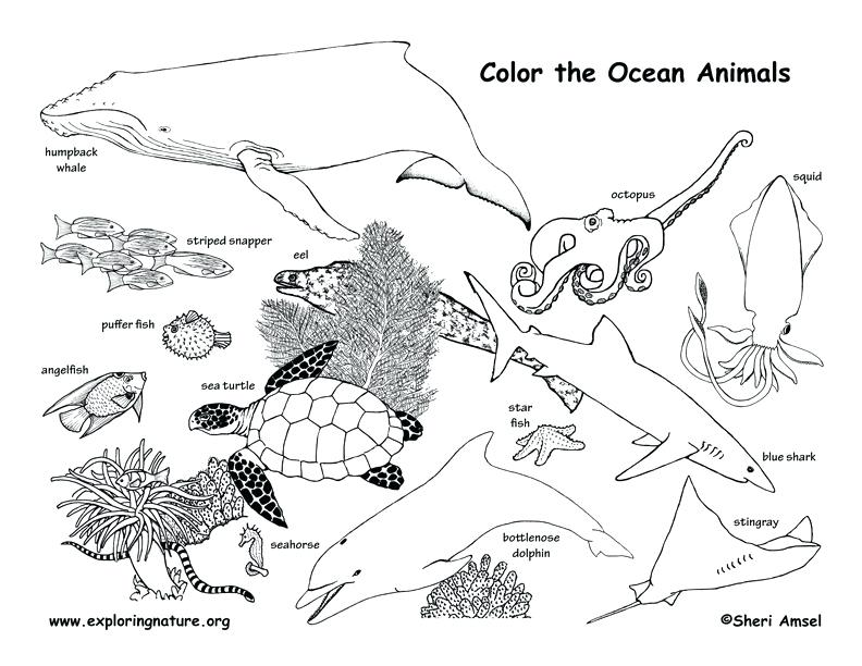 animal habitat coloring pages - forest habitat drawing at free for
