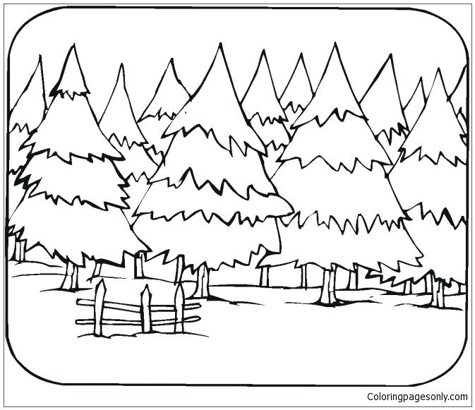 673x581 Forest Coloring Page Pine Tree Forest Coloring Page Forest