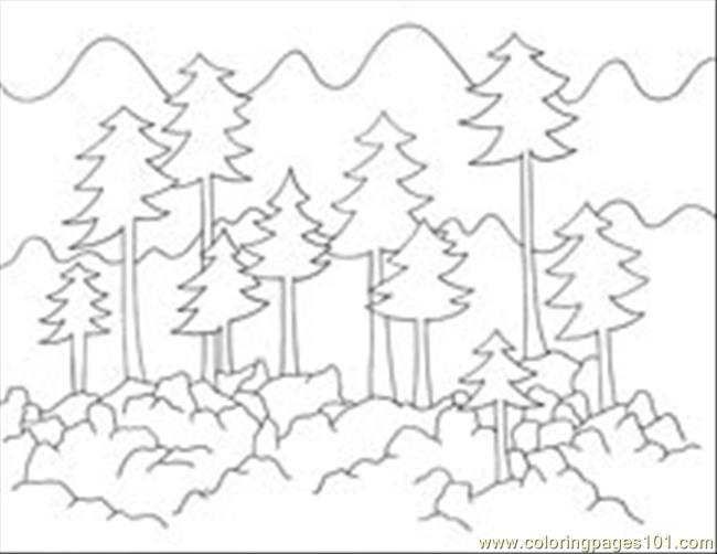 650x502 Forest Coloring Pages