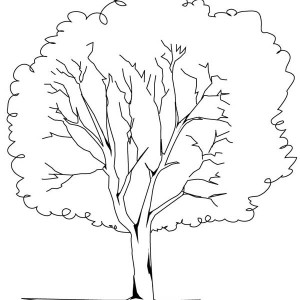 300x300 Oak Tree In The Forest Coloring Page Oak Tree In The Forest