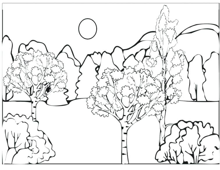 756x585 Forest Coloring Page Pine Tree Forest Coloring Page Forest