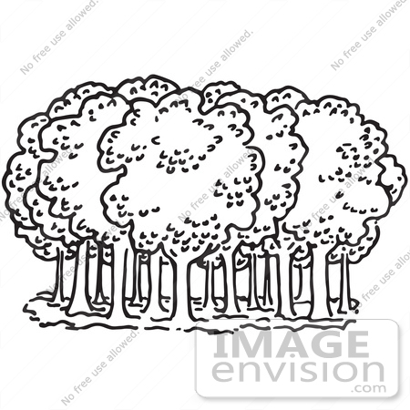 Forest Trees Drawing at GetDrawings