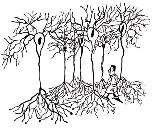 310x256 Exploring The Neuron Forest The Scientist
