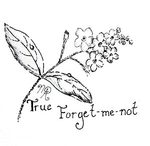 300x292 Forget Me Not Drawings Fine Art America