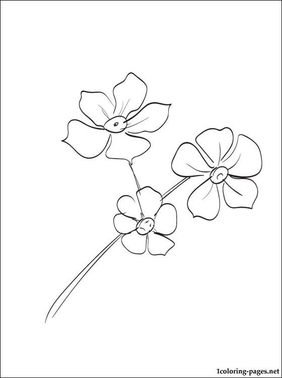 560x750 Forget Me Not Flower Coloring Page Forget Me Not Outline
