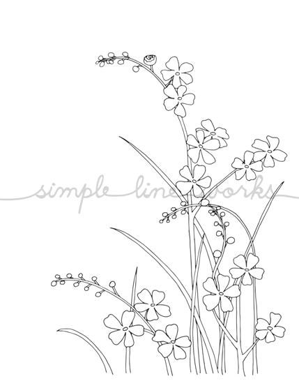 429x546 Forget Me Not Flowers, B w Or Color, Reproduction From Original