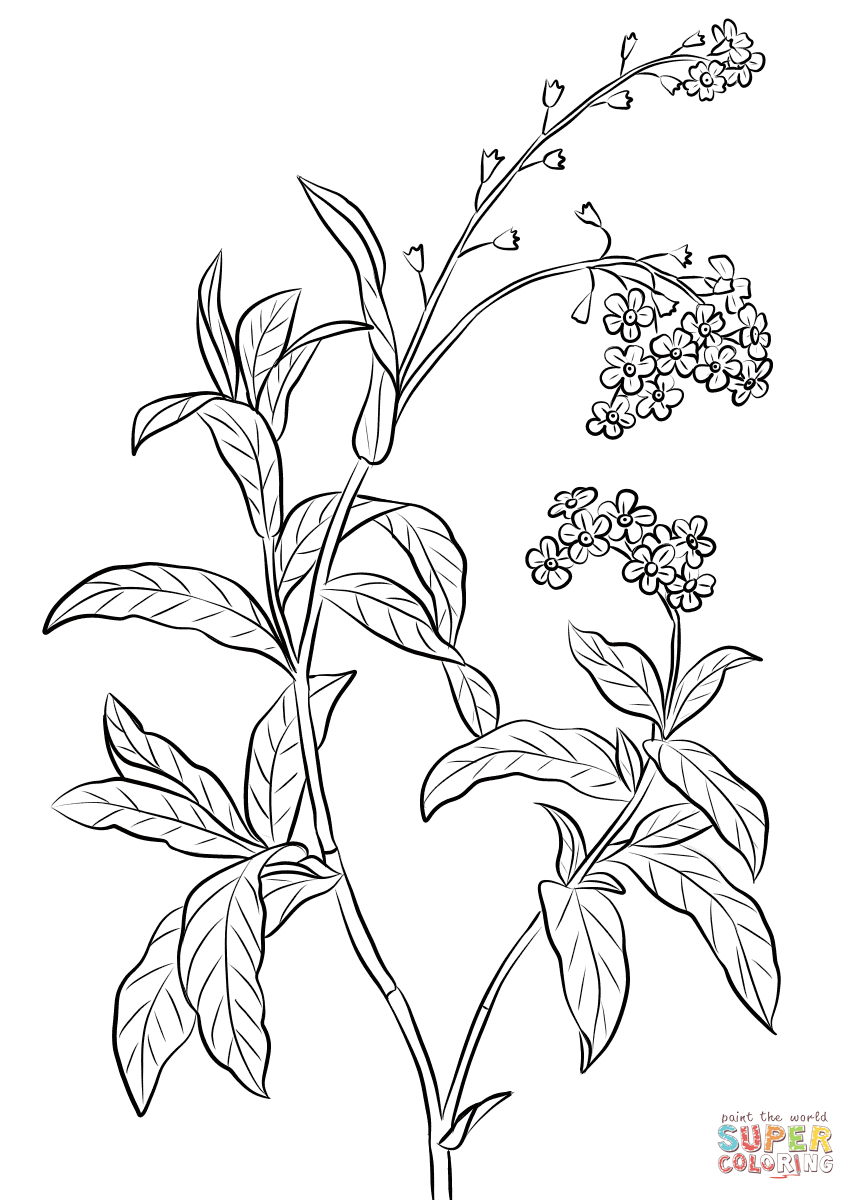 856x1200 Forget Me Not Coloring Page Free Printable Coloring Pages