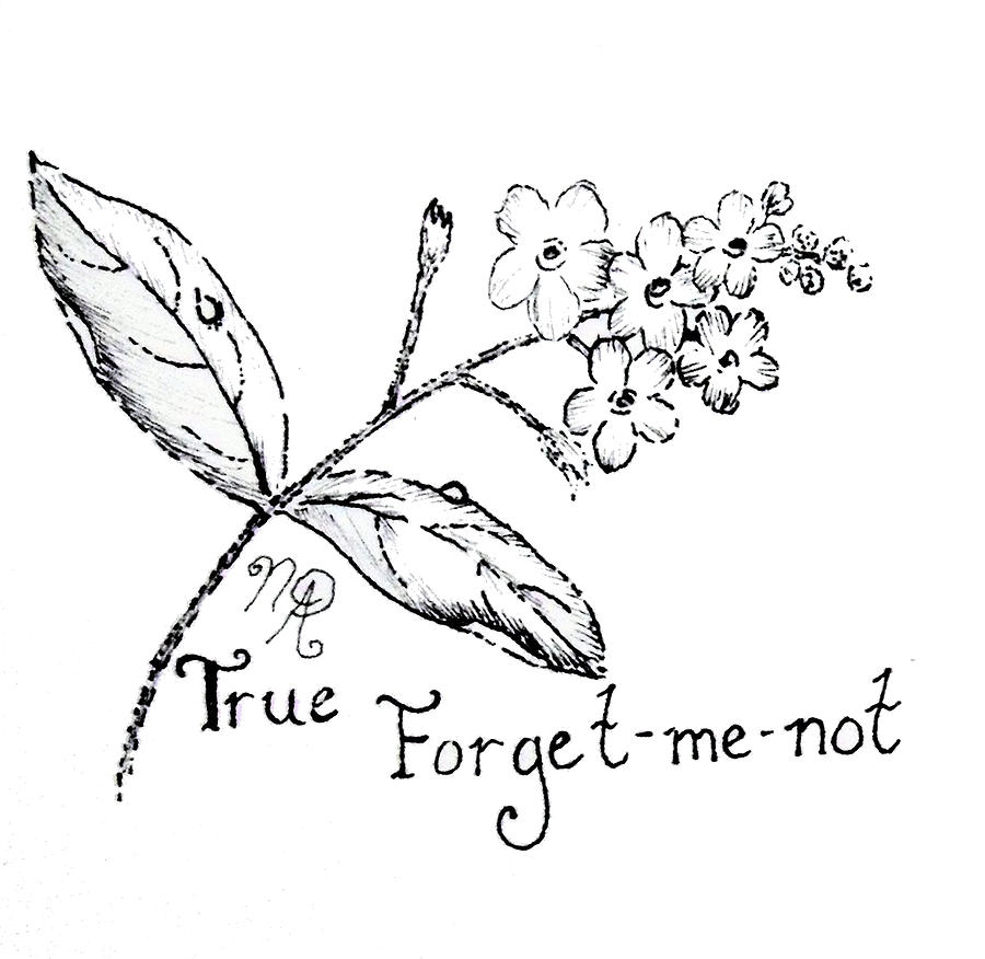 900x876 True Forget Me Not Drawing By Nicole Angell