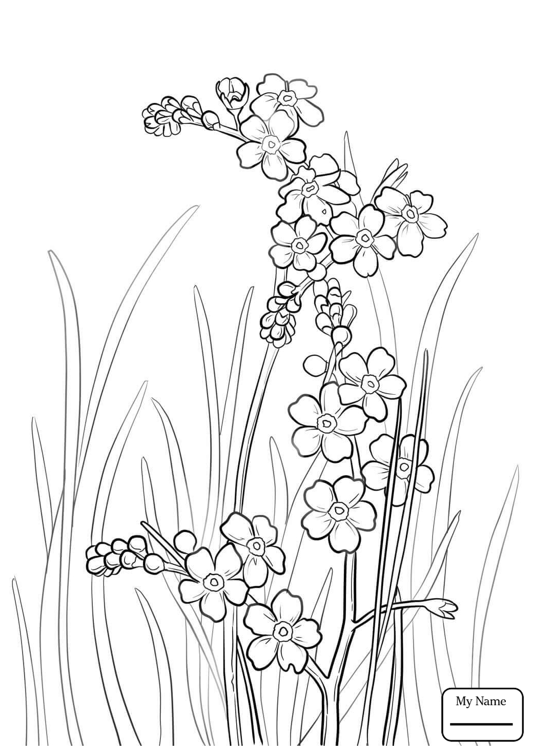 1040x1469 Coloring Pages Flowers Forget Me Not Alpine Forget Me Not