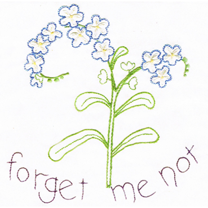 720x720 Forget Me Not