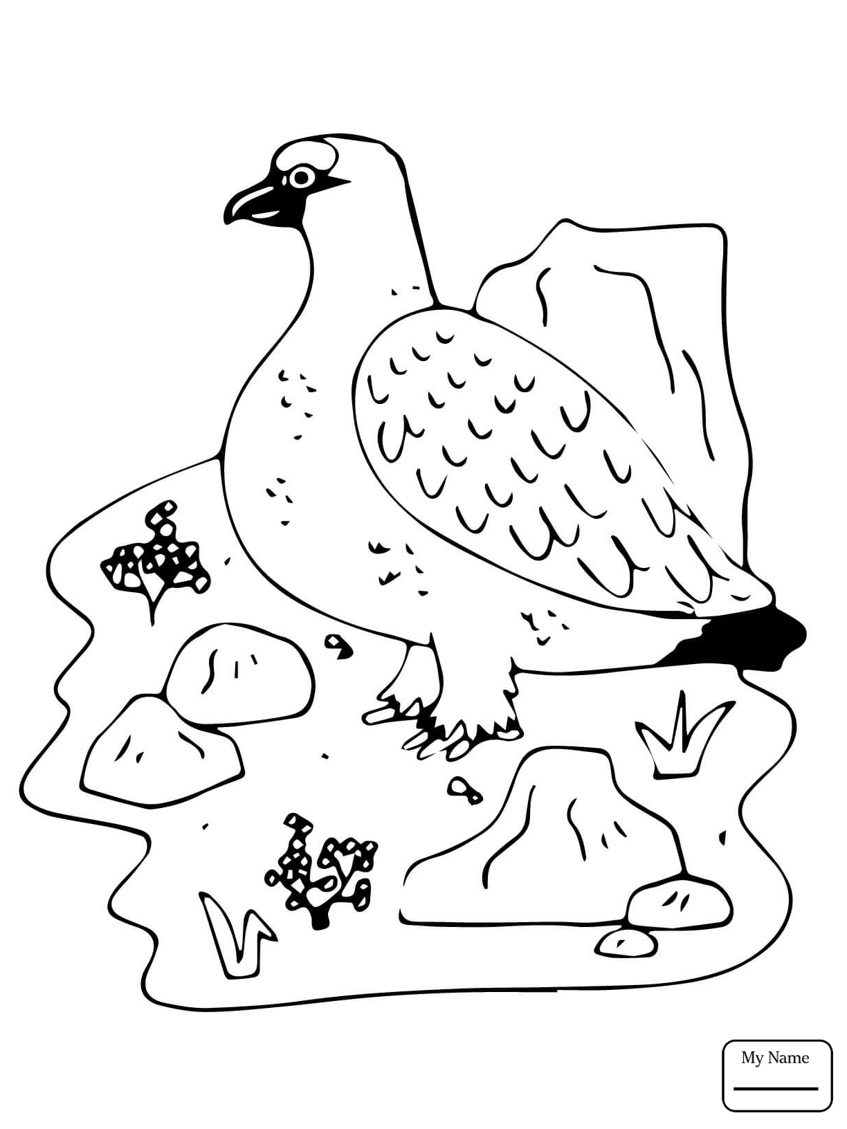 1224x1632 Willow Ptarmigan And Forget Me Not Flowers Alaska Bird And Flower
