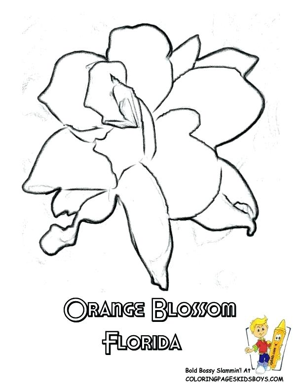 612x792 Saguaro Cactus Coloring Page Flower Coloring Pages For Official