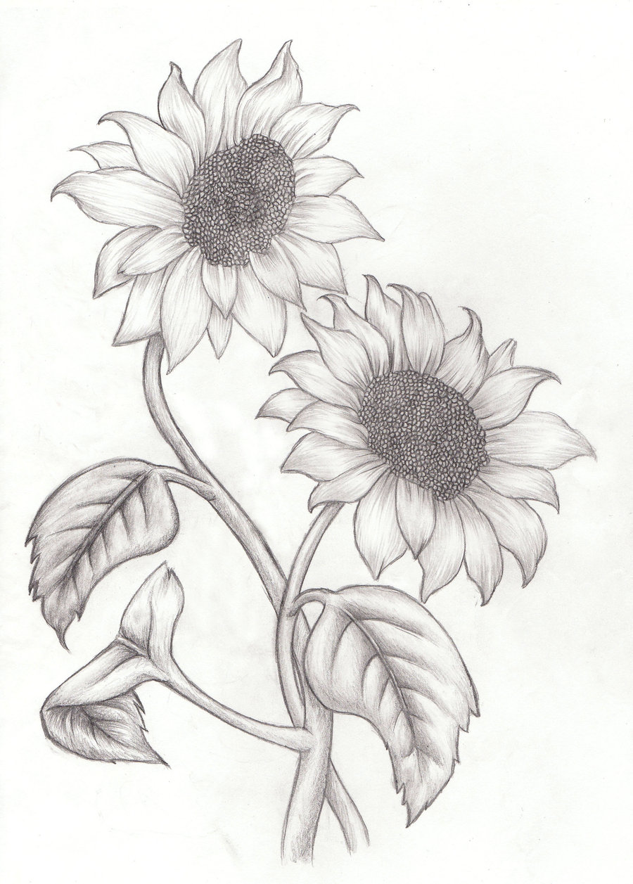 900x1257 Eleletsitz Sunflowers Drawing Tumblr Images