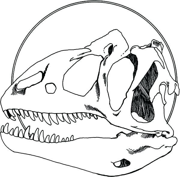 600x590 Fossil Coloring Pages Fossil Coloring Pages Free Printable Fossil