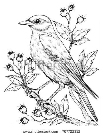 360x470 Image Result For Drawn Pictures Of Birds Ink Fountain Pen