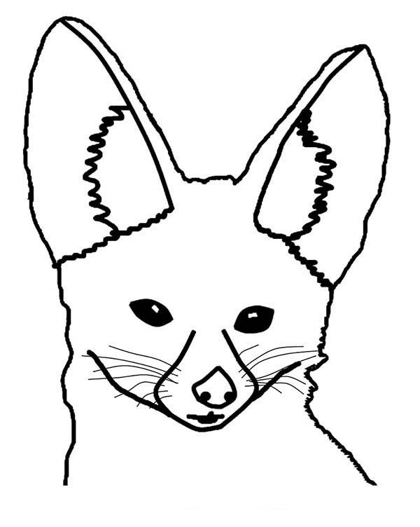 600x752 Drawn Desert Desert Fox