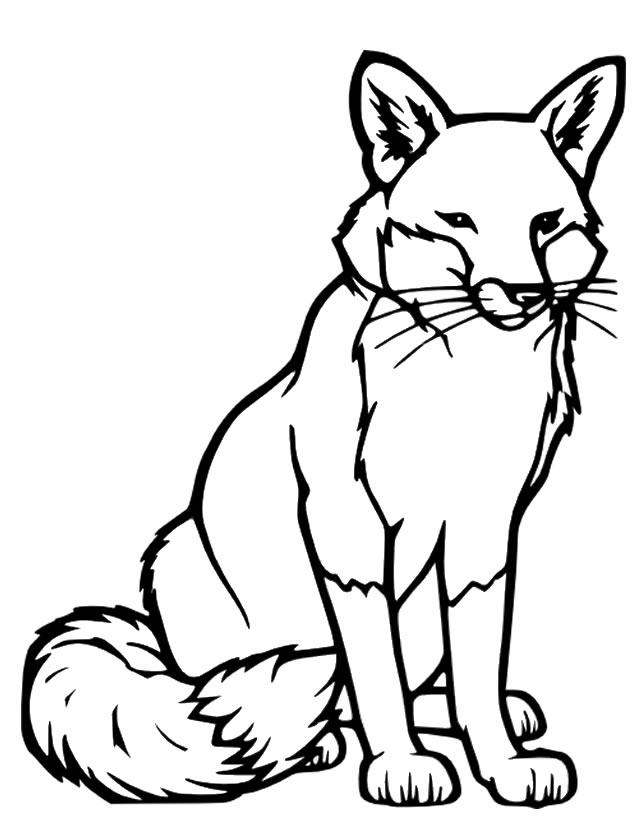 638x825 Fox