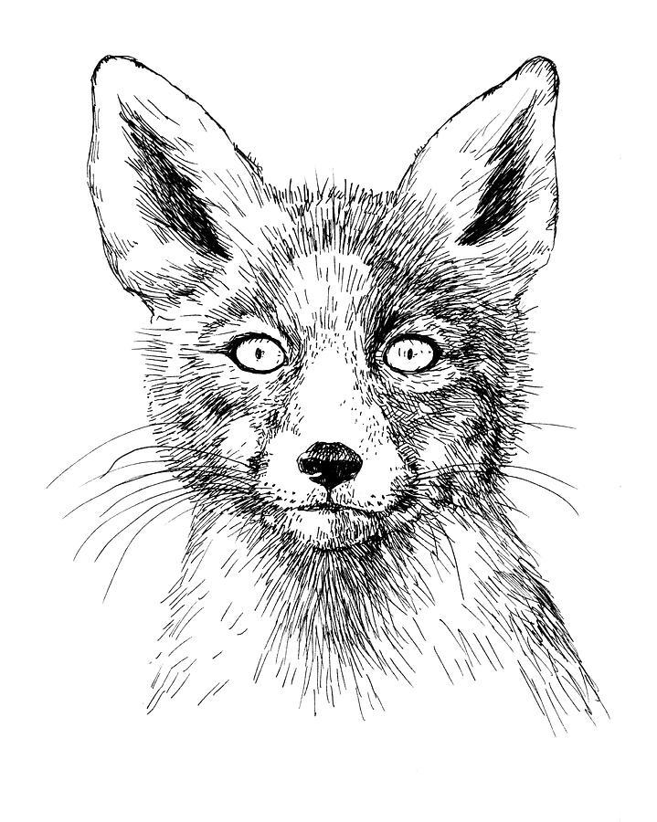 719x900 Fox Portrait, Ink Drawing Drawing By Katerina Kirilova
