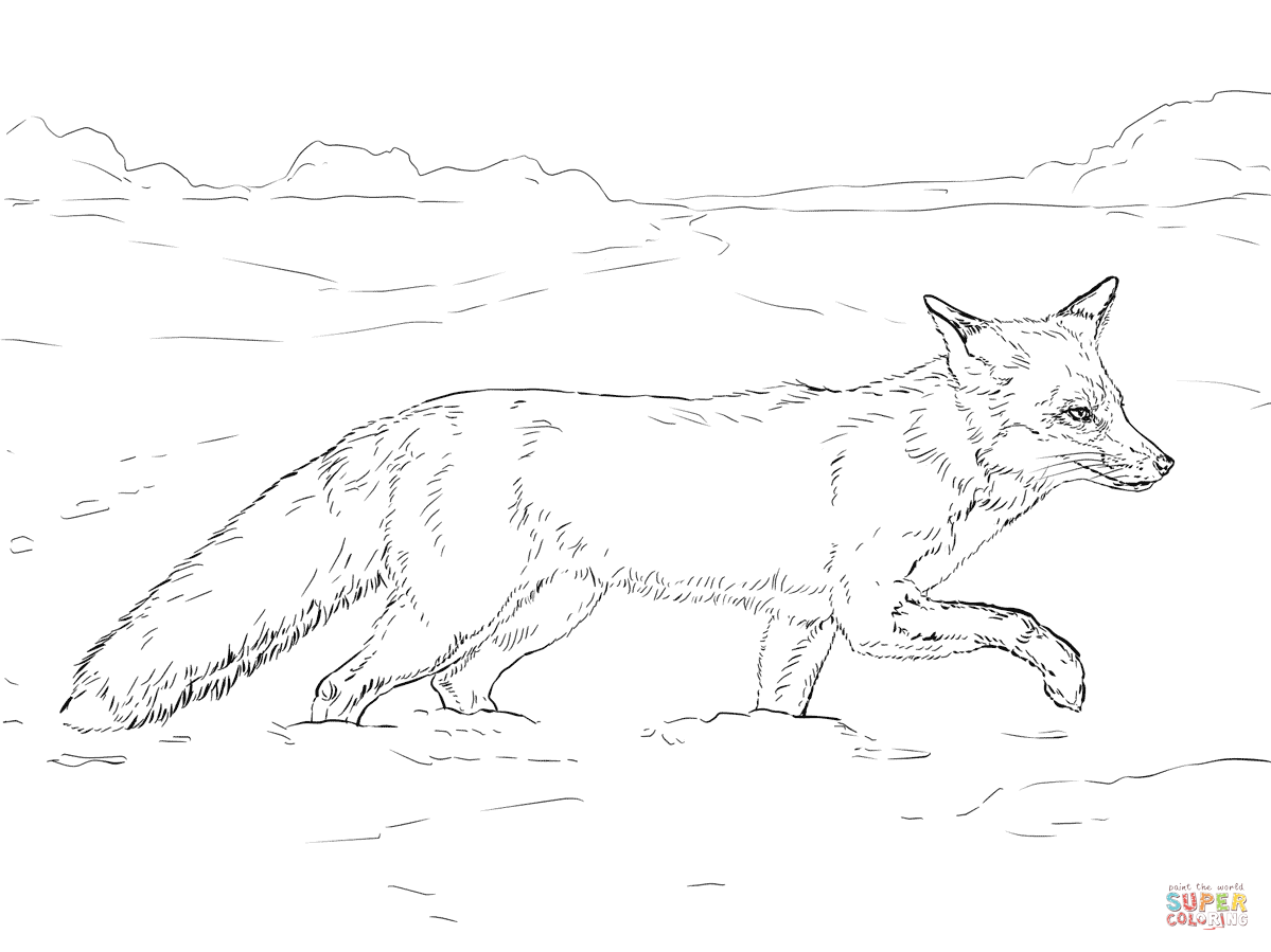 1199x899 Red Fox Walking On Snow Coloring Page Free Printable Coloring Pages
