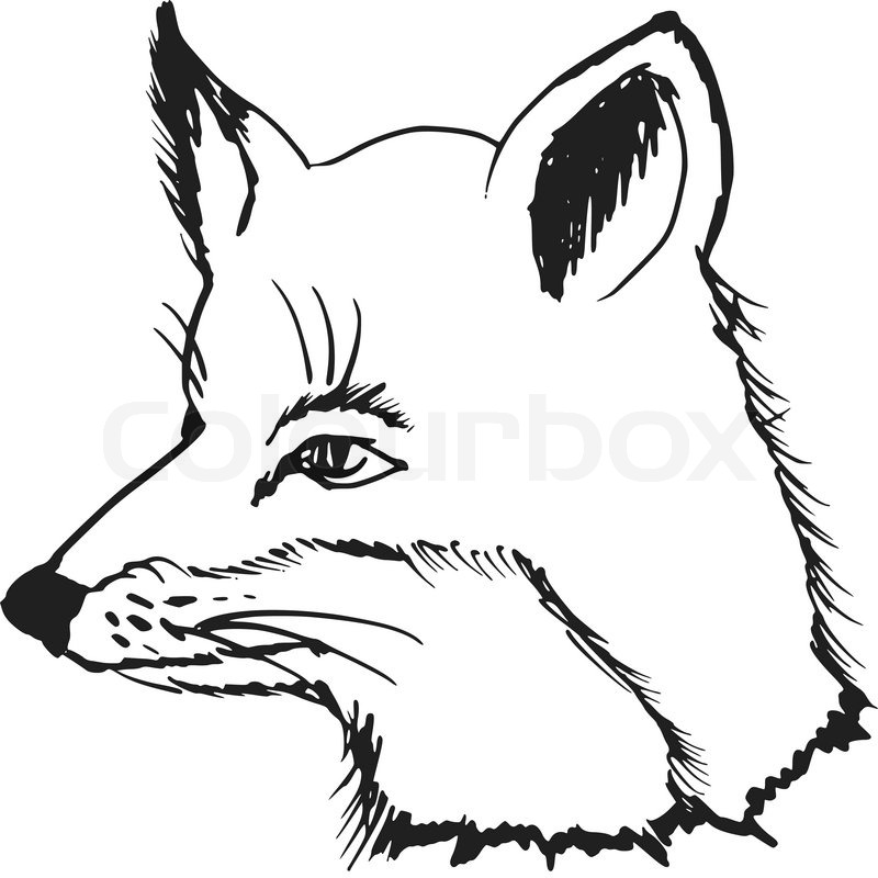 800x800 Hand Drawn, Sketch, Cartoon Illustration Of Fox Stock Vector