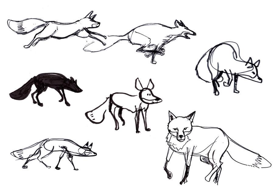 900x636 Red Fox Studies