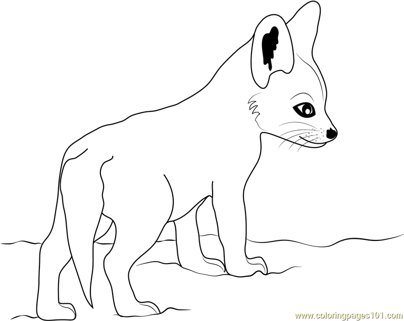 800x637 Cute Baby Fox Coloring Page