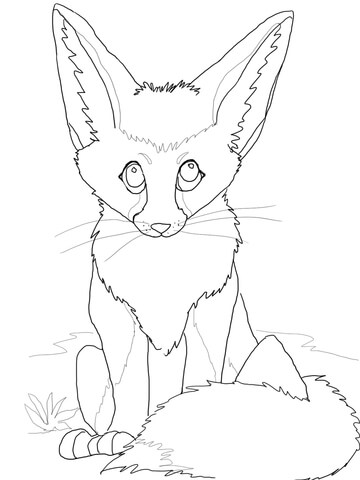 360x480 Cute Fennec Fox Coloring Page Free Printable Coloring Pages
