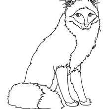 220x220 Cute Fox Coloring Pages