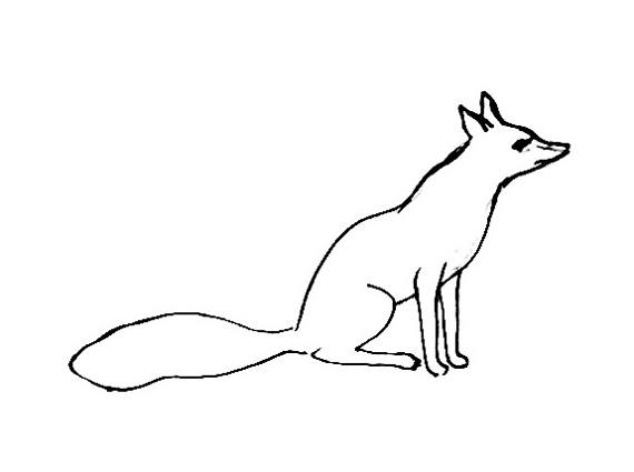 570x425 Fox Coloring Pages