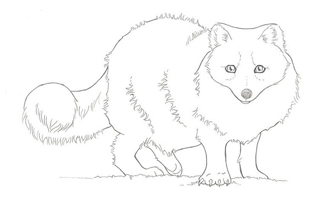 640x398 Arctic Fox Clipart Cute