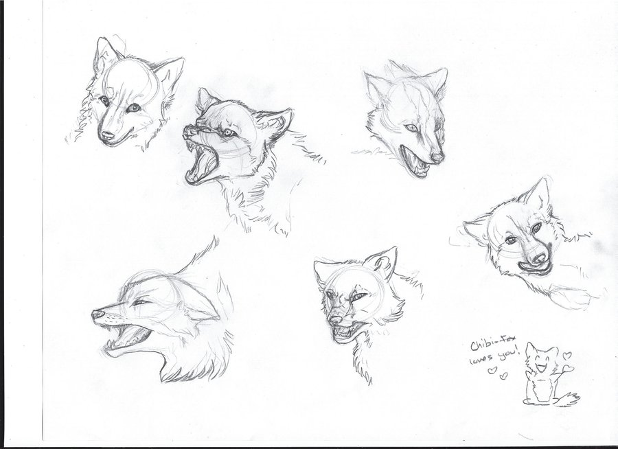 900x654 Fox Head Sketches By Headofmanycolors