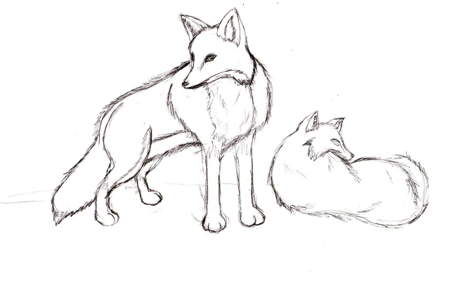 639x403 Fox Drawing Previous By Seliex