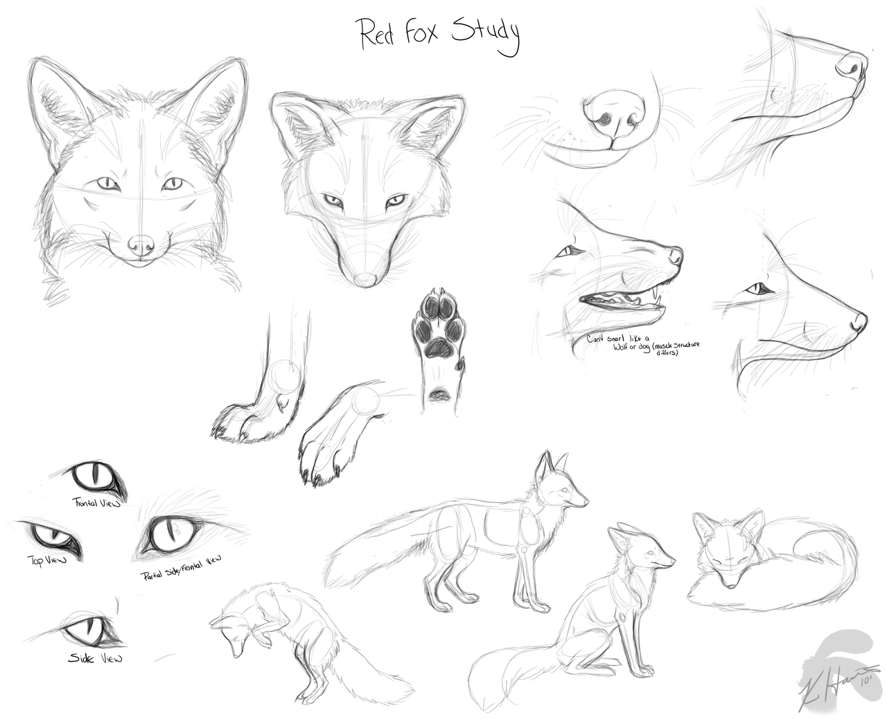 1280x1038 How To Drawing Doodles red fox doodles by ~Krissyfawx on