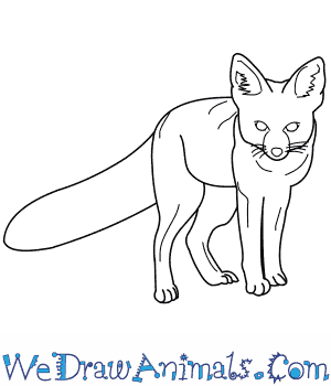 300x350 How To Draw A Kit Fox