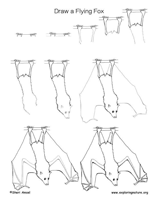612x792 Bat (Flying Fox) Drawing Lesson
