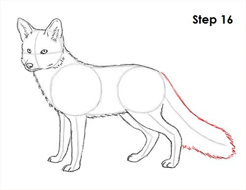 500x386 How To Draw A Fox