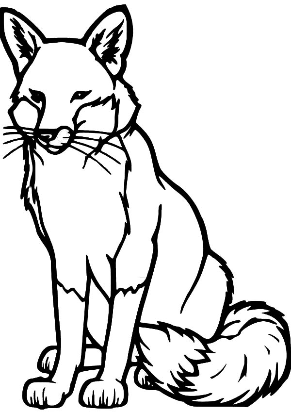 600x849 Drawing Kit Fox Coloring Pages