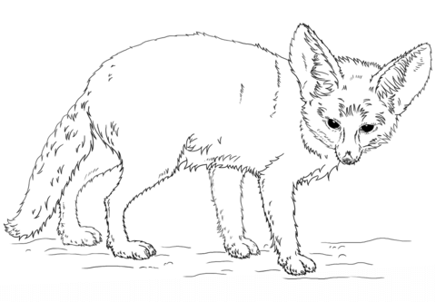 480x333 Fennec Fox Coloring Page Free Printable Coloring Pages