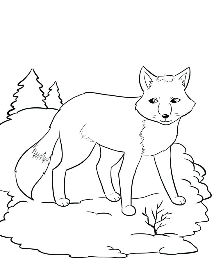 736x952 Red Fox Coloring Pages Coloring Pages About Arctic Foxes Arctic
