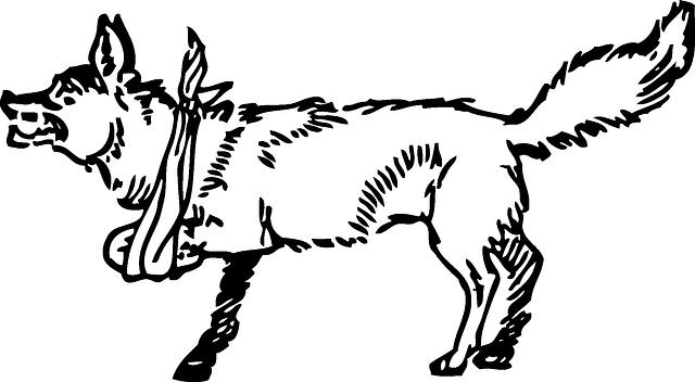 640x352 Outline, Fox, Broken, Leg, Animal, Mammal, Arm, Lame