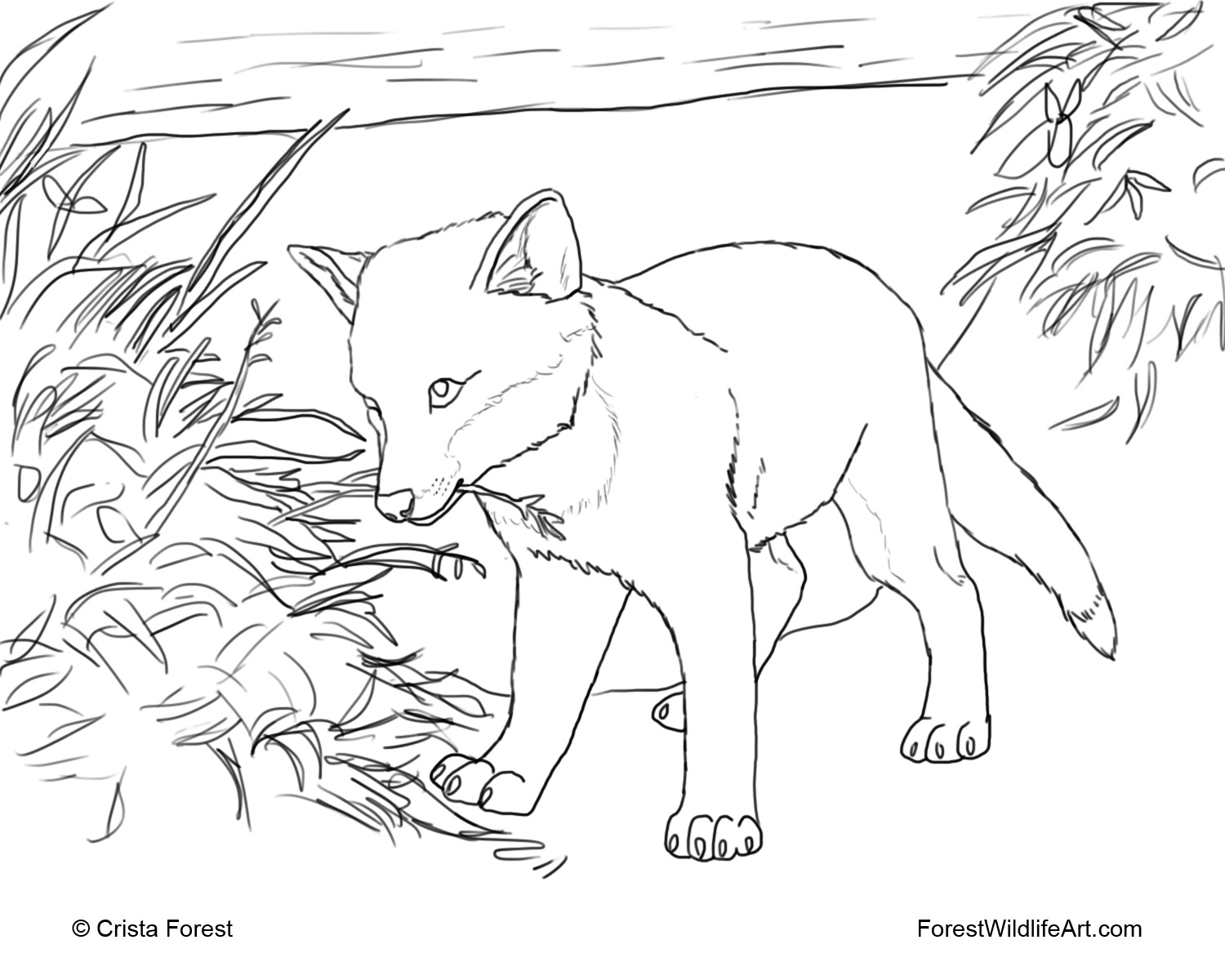 1500x1200 Forest Wildlife Art Coloring Book Page