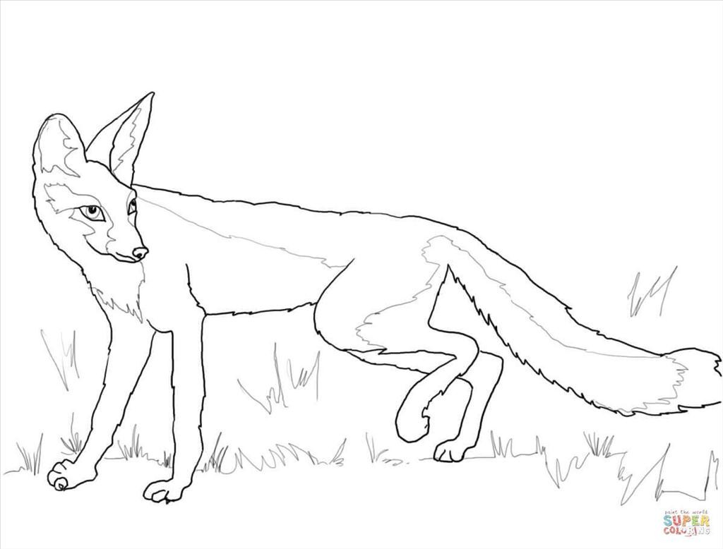 1024x778 Top Fox Coloring Pages Snapshot Unknown Resolutions High