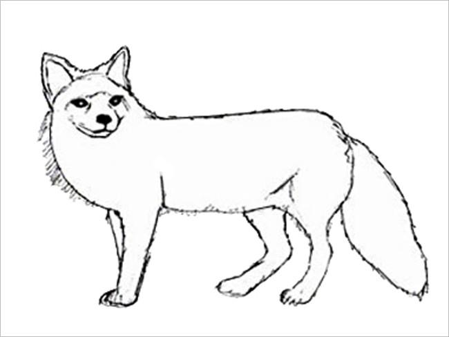 Fox Simple Drawing