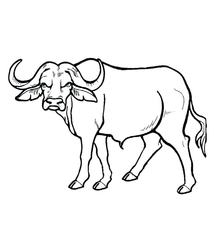 700x820 Buffalo Template Animal Templates Free Premium Africa Flag