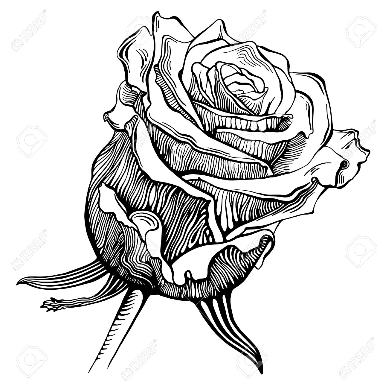 1261x1300 Black And White Digital Drawing Sketch Rose Royalty Free Cliparts